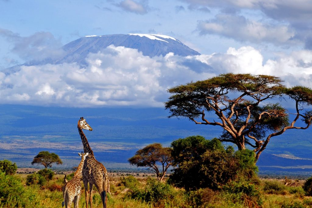 Mt.Kilimanjaro highest african mountain