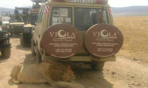 viola tour Safari Vehicles