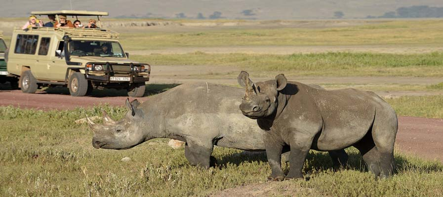 Serengeti-and-Ngorongoro-Crater-Rhinos