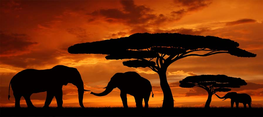 serengeti-elephants-in-the-sunset