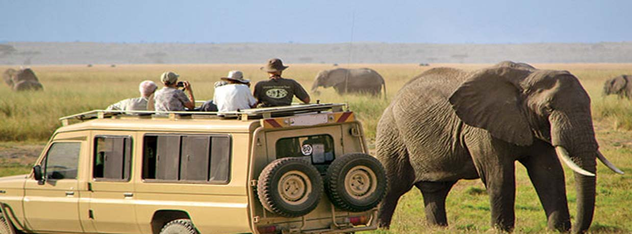 serengeti safari elephant